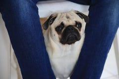 美丽和特别小狗,爱 免版税库存图片