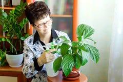 美丽的室内植物在一个木控制台站立 免版税库存照片