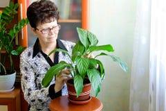 美丽的室内植物在一个木控制台站立 库存照片