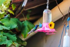 美丽的鸟在您的居住 库存照片
