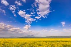 美好的与五颜六色的明亮的黄色油菜籽芸苔napus庄稼和剧烈的深蓝色多云天空的春天自然风景和 免版税库存图片