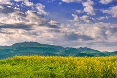 美好的与五颜六色的明亮的黄色油菜籽芸苔napus庄稼和剧烈的深蓝色多云天空的春天自然风景和 免版税库存照片