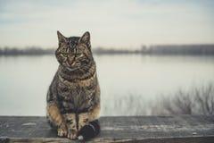 猫坐一个委员会有河背景  免版税库存图片