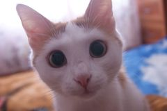 猫在家 免版税库存照片