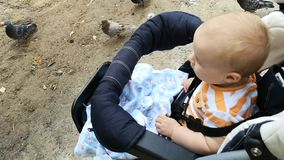 看在鸟的婴儿推车的小男孩走在地面上 股票视频