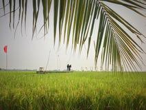玻璃水稻 库存图片
