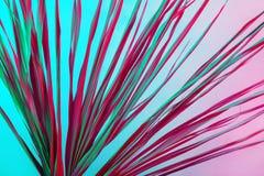 热带分支干燥桃红色蓝色紫色红色叶子背景珊瑚抽象棕榈草杂草象草的塑料紫外 库存照片