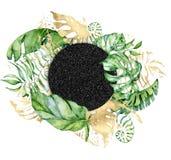 热带水彩在白色背景留下横幅 异乎寻常的花卉设计 象查找的画笔活性炭被画的现有量例证以图例解释者做柔和的淡色彩对传统 向量例证