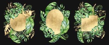 热带水彩在黑背景留下横幅 异乎寻常的花卉设计 象查找的画笔活性炭被画的现有量例证以图例解释者做柔和的淡色彩对传统 皇族释放例证