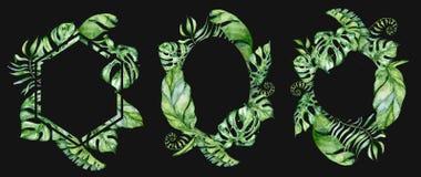 热带水彩在黑背景留下横幅 异乎寻常的花卉设计 象查找的画笔活性炭被画的现有量例证以图例解释者做柔和的淡色彩对传统 向量例证