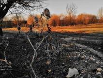 焦点和秋天颜色的清楚的植物 免版税库存照片