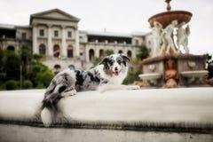 狗博德牧羊犬在公园坐 友谊、爱、幸福、家庭和姐妹的概念 安置文本 库存照片