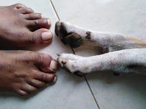 狗和人的陪伴概念4 免版税库存照片