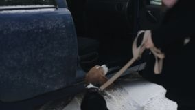 狗所有者打开车门 小狗在汽车跳 后面观点的小猎犬狗 小猎犬狗跳跃 影视素材