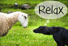 狗遇见绵羊,文本放松,绿草 免版税库存照片
