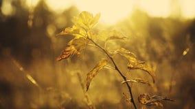 狂放的干草原接近的看法通过灌木和草分支在太阳眨眼 股票视频