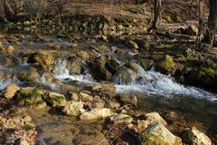 狂放的森林、丛林和森林湖和河 免版税图库摄影