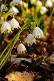 狂放的春天雪花在森林里 库存照片