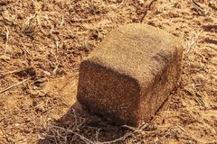 盐或矿物块特写镜头放置在红色地球的牛的-部分地舔动物的红色颤鸣的地球上 图库摄影