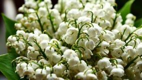 白色铃兰花束 影视素材