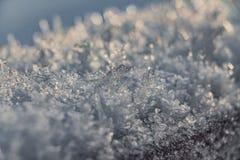 白雪美丽的随风飘飞的雪与冰和黄色阳光和bokeh光的在被弄脏的背景的日落在公园 免版税库存照片
