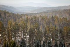 用森林盖的山在冬天 免版税库存照片