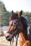 用欢乐表现的五颜六色的丝带装饰的马的画象在阅兵场 免版税库存照片