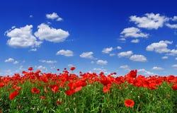 田园诗看法,有红色鸦片蓝天的草甸在背景中 图库摄影