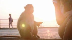 由香蕉的妇女哺养的狒狒猴子 股票视频