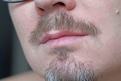男性嘴唇、髭和胡子特写镜头 灰色头发灰色胡子 美丽的髭和胡子 免版税图库摄影