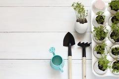 生长在白色背景的蛋壳的蔬菜沙拉新芽 背景看板卡绿色风信花叶子百合Spring Valley 免版税库存图片