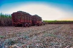 甘蔗领域机械收获与拖拉机运载的收获 免版税库存图片
