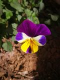 çiçek Royalty Free Stock Image