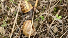 联接本质上的两三只棕色蜗牛 股票录像