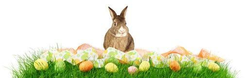 草全景用复活节彩蛋和兔子在白色背景 库存图片