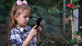 蝴蝶坐分支,女孩设法做昆虫照片 4K缓慢的mo 影视素材
