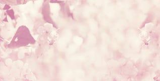 被弄脏的春天花卉背景,横幅 免版税库存照片