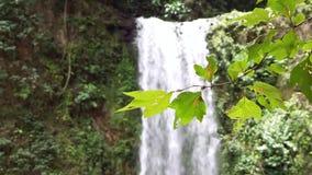 被弄脏的瀑布和叶子在前景 影视素材