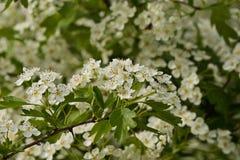 许多花和绿色叶子 免版税库存照片