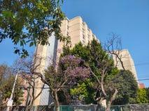 设置居住单位在墨西哥城 库存图片