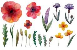 设置野花和草本 鸦片、矢车菊和其他花 查出 库存例证