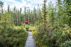 访客在列斯主要Jardins国立公园,魁北克的看沼泽 免版税库存照片