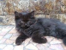 说谎在地板上的可爱的黑小猫 免版税库存图片