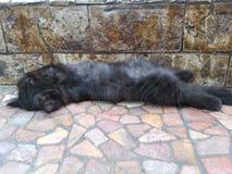 说谎在地板上的可爱的黑小猫 免版税库存照片
