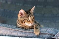 躺下和观察从一个蓝色长沙发的猫 免版税库存照片