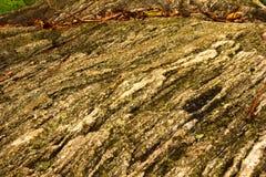 软的被射击的岩石纹理背景 图库摄影