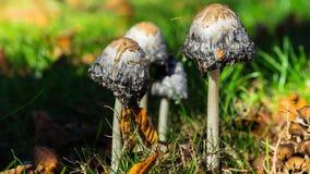 迅速移动在有些蘑菇 影视素材