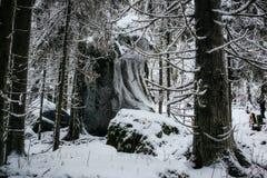 芬兰森林在冬天 库存图片