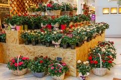 花店概念 混杂的花特写镜头美丽的可爱的花束在木桌上的 开花构成 摘要 库存照片