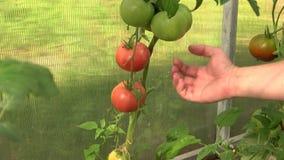 花和蔬菜 影视素材